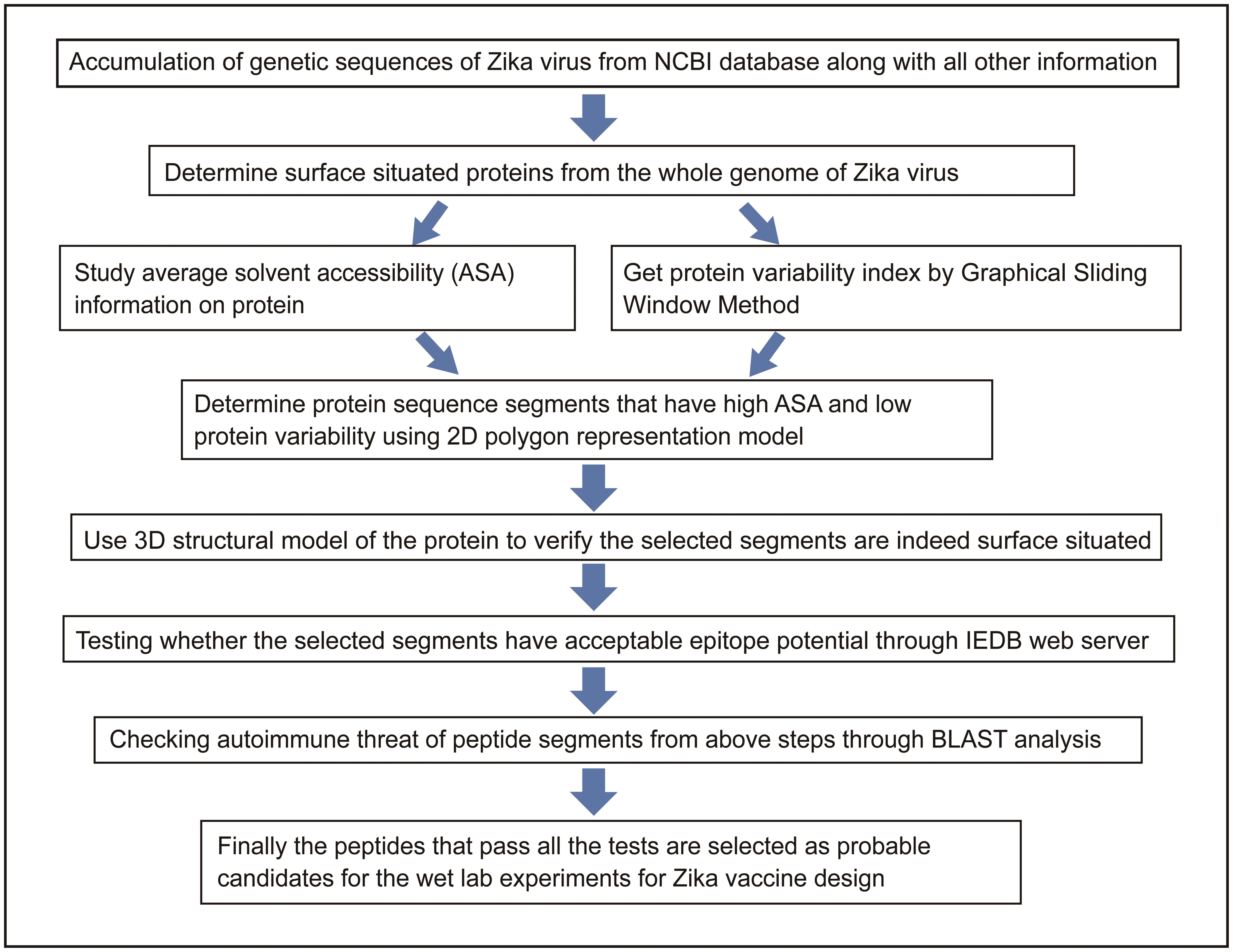 Flow chart describing the search for suitable peptide regions of Zika virus.