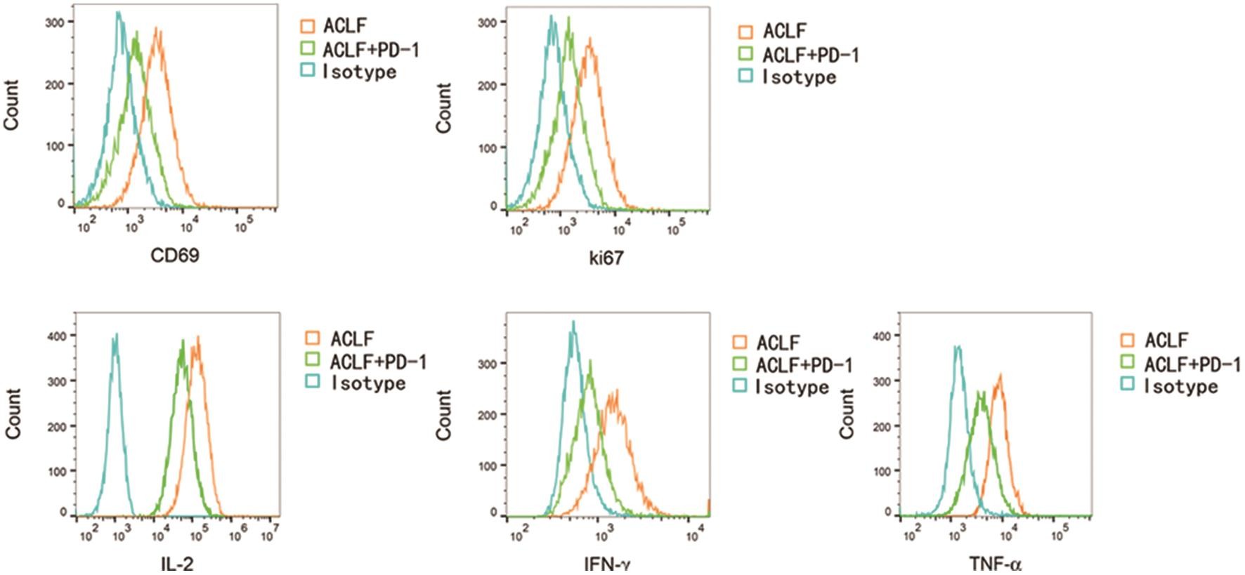 When PD-1/PD-L1 was activated, the cell viability (CD69) (MFI: 917±43 vs. 1,723±143, <italic>p</italic><0.001] and proliferative ability (Ki67) (MFI: 940±71 vs. 1,737±139, <italic>p</italic><0.001) of CD8+ T lymphocytes in patients in the ACLF+PD-1 group were lower than those in the ACLF group.