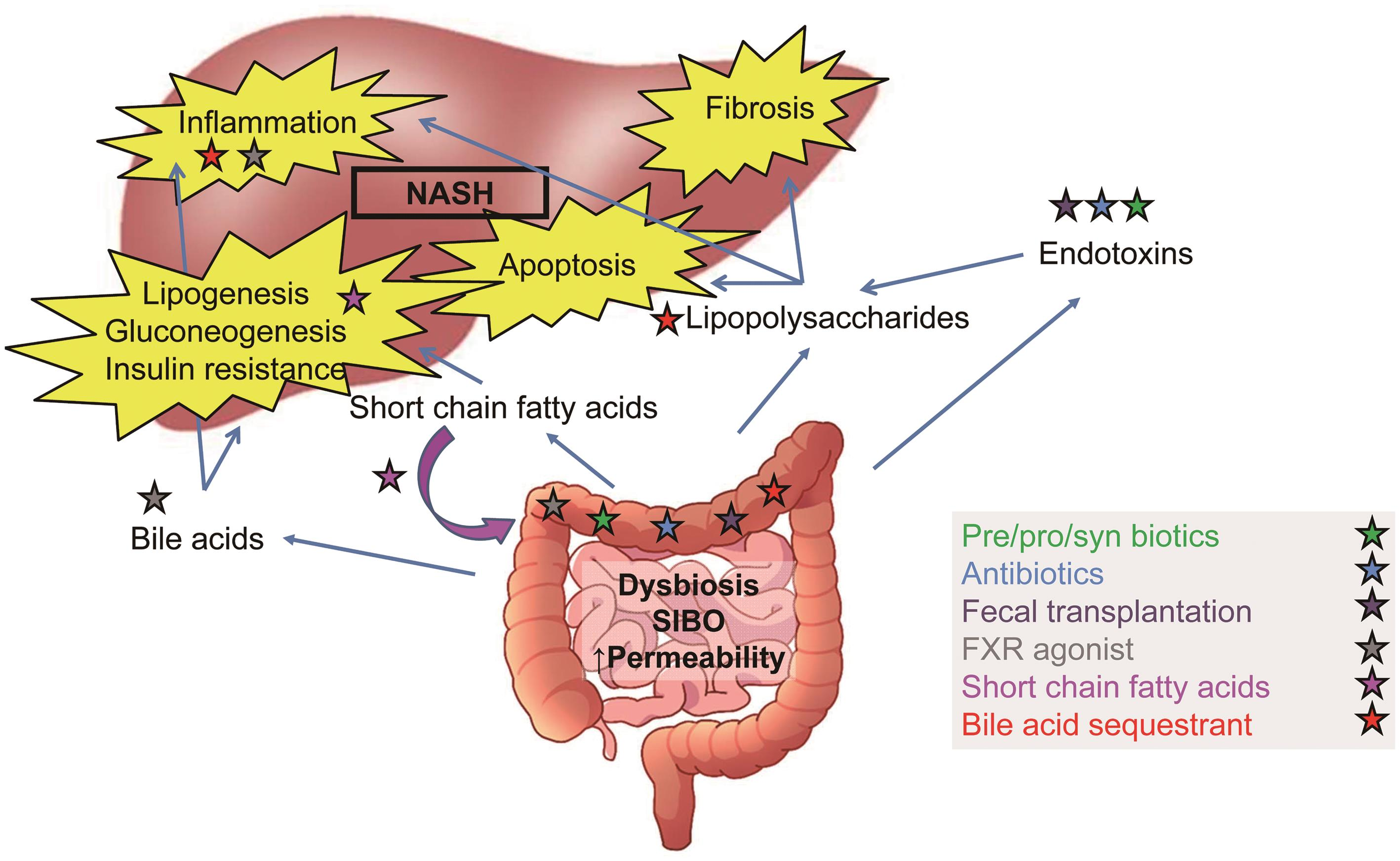 Proposed mechanism of action of treatments for NASH targeting microbiome changes.