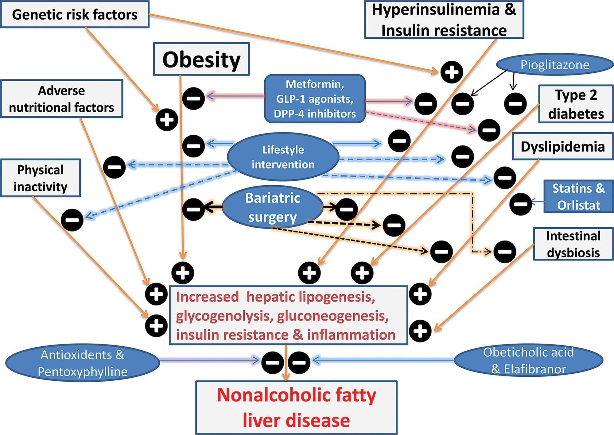 Pathogenesis of nonalcoholic fatty liver disease and effects of various therapeutic interventions.