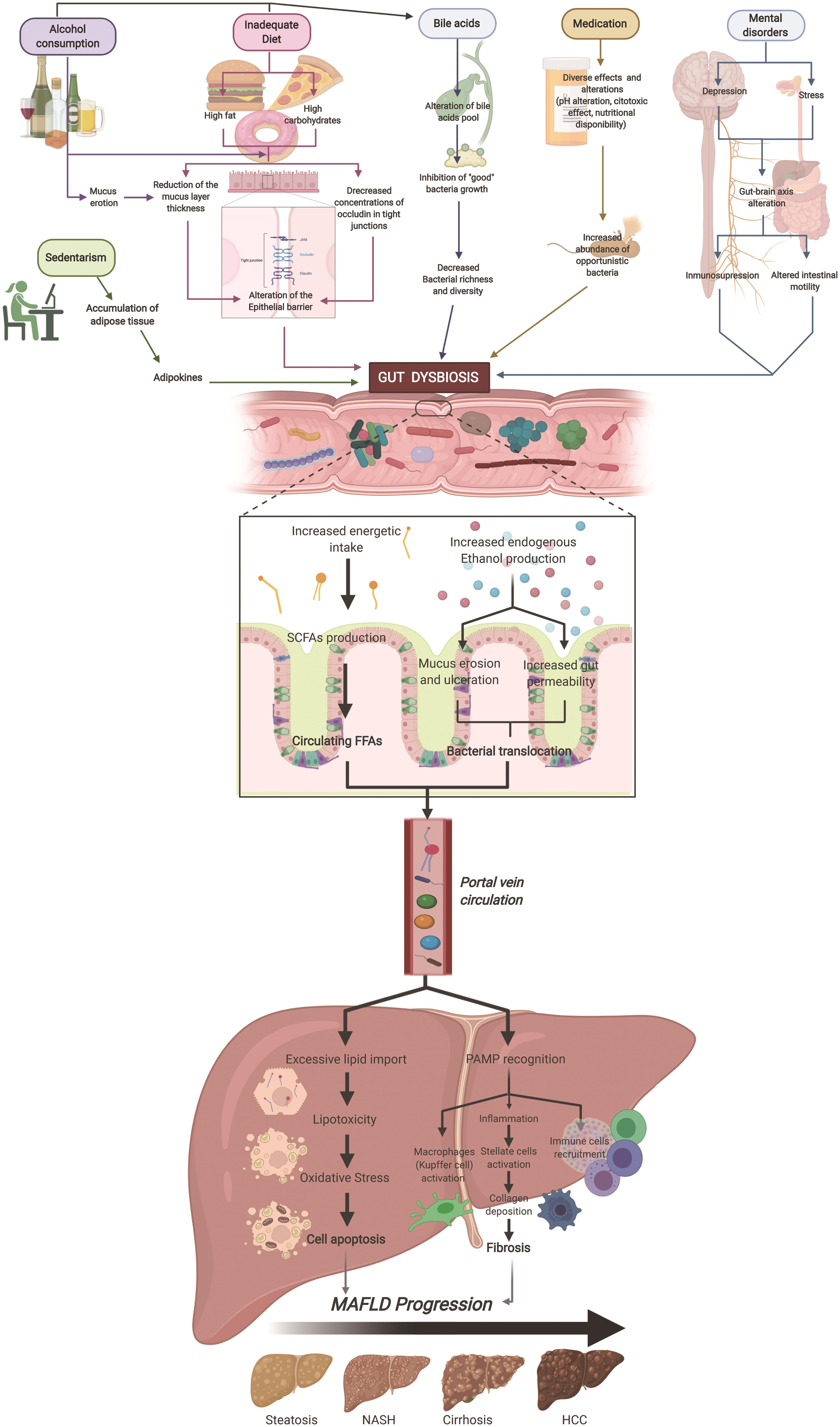 Factors that promote gut dysbiosis and its effect on MAFLD.