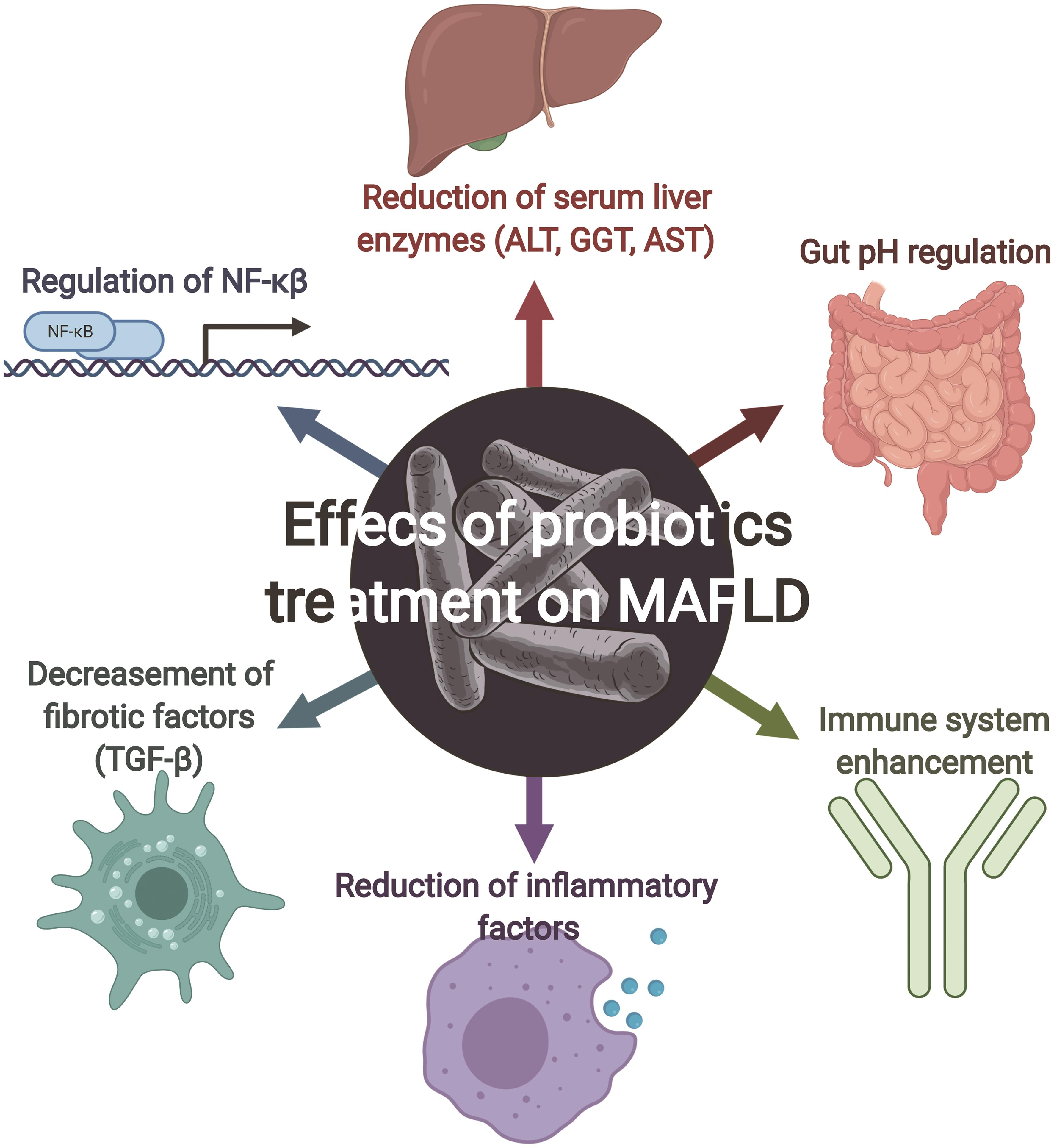 Effects of probiotic treatment on MAFLD.