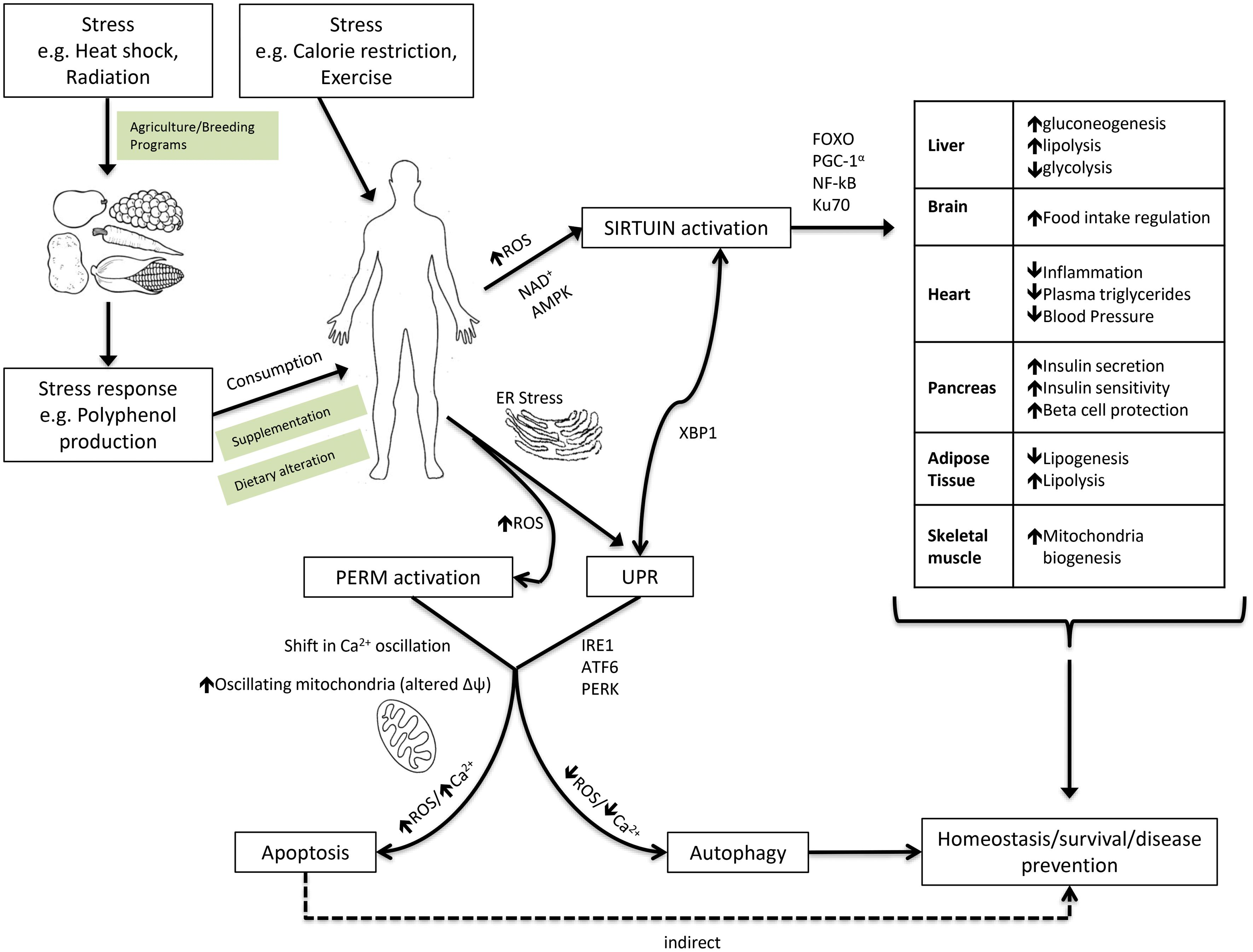 Phytochemical Adaptations to Stress