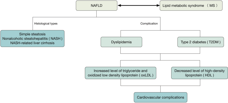 The interrelationship among NAFLD, NASH, dyslipidemia, MS, and cardiovascular complications.