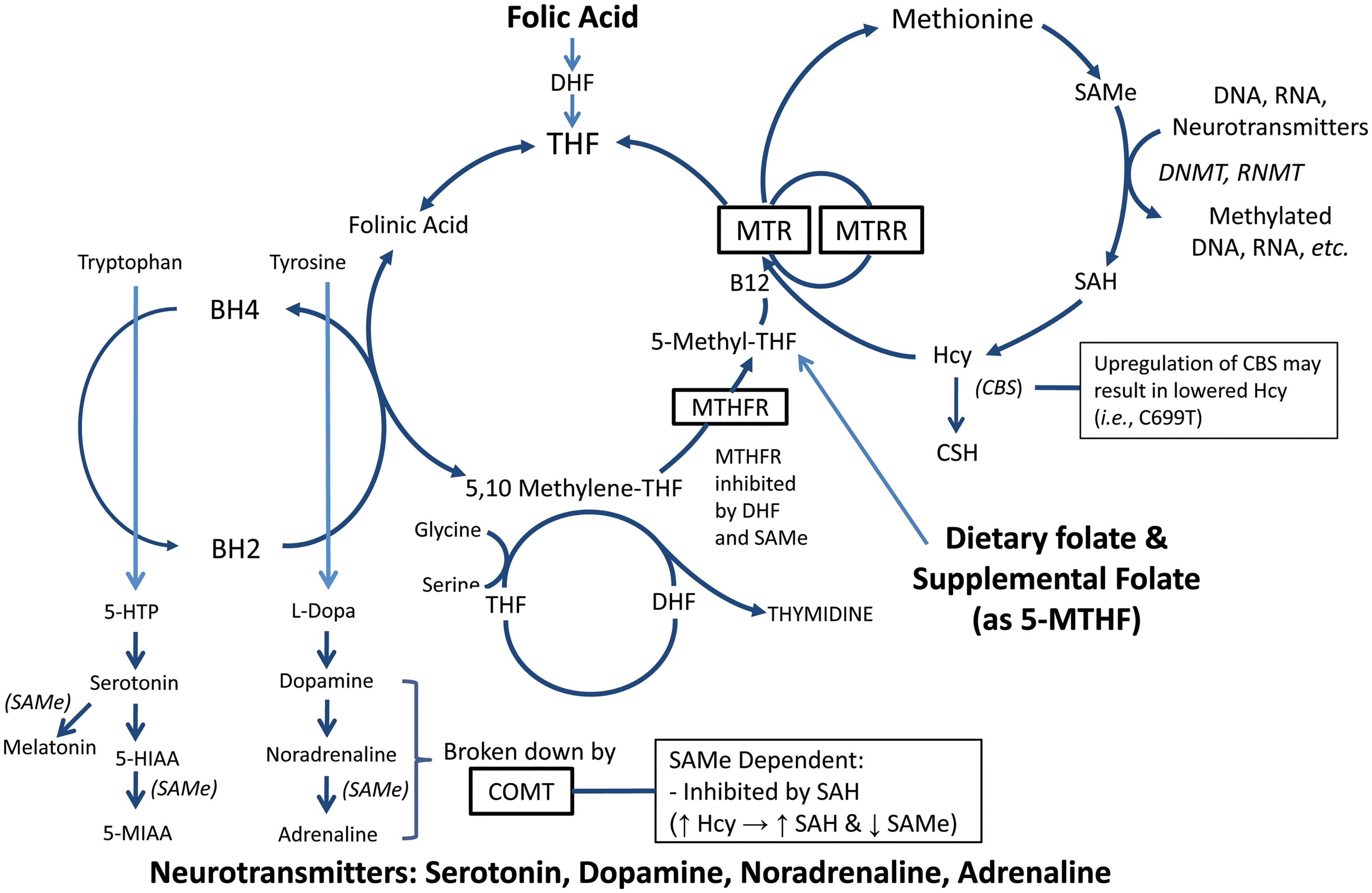 Relationship between folate, methylation and neurotransmitters involved with depression.