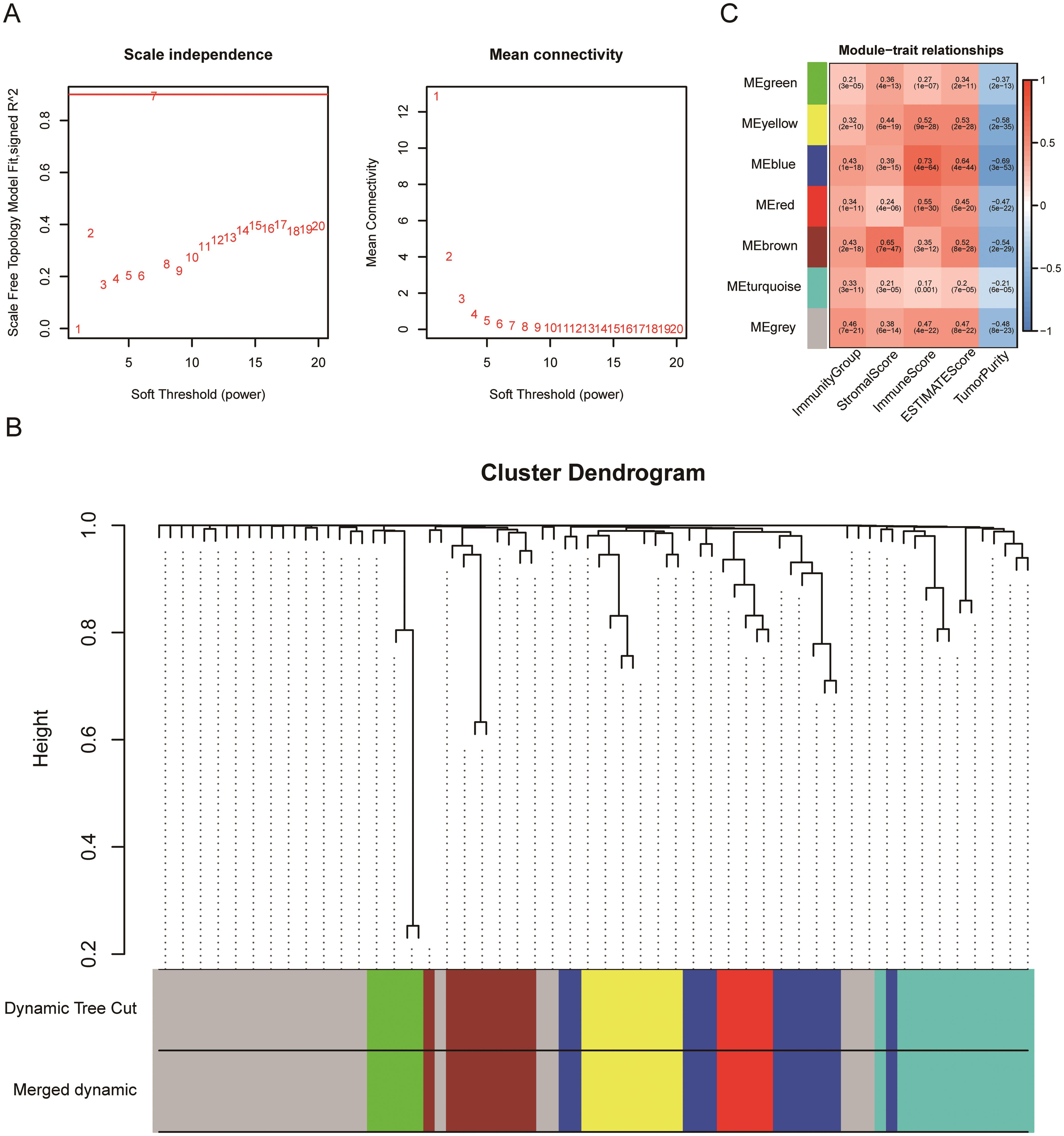 Construction of WGCNA co-expression modules and identification of modules associated with immune traits.