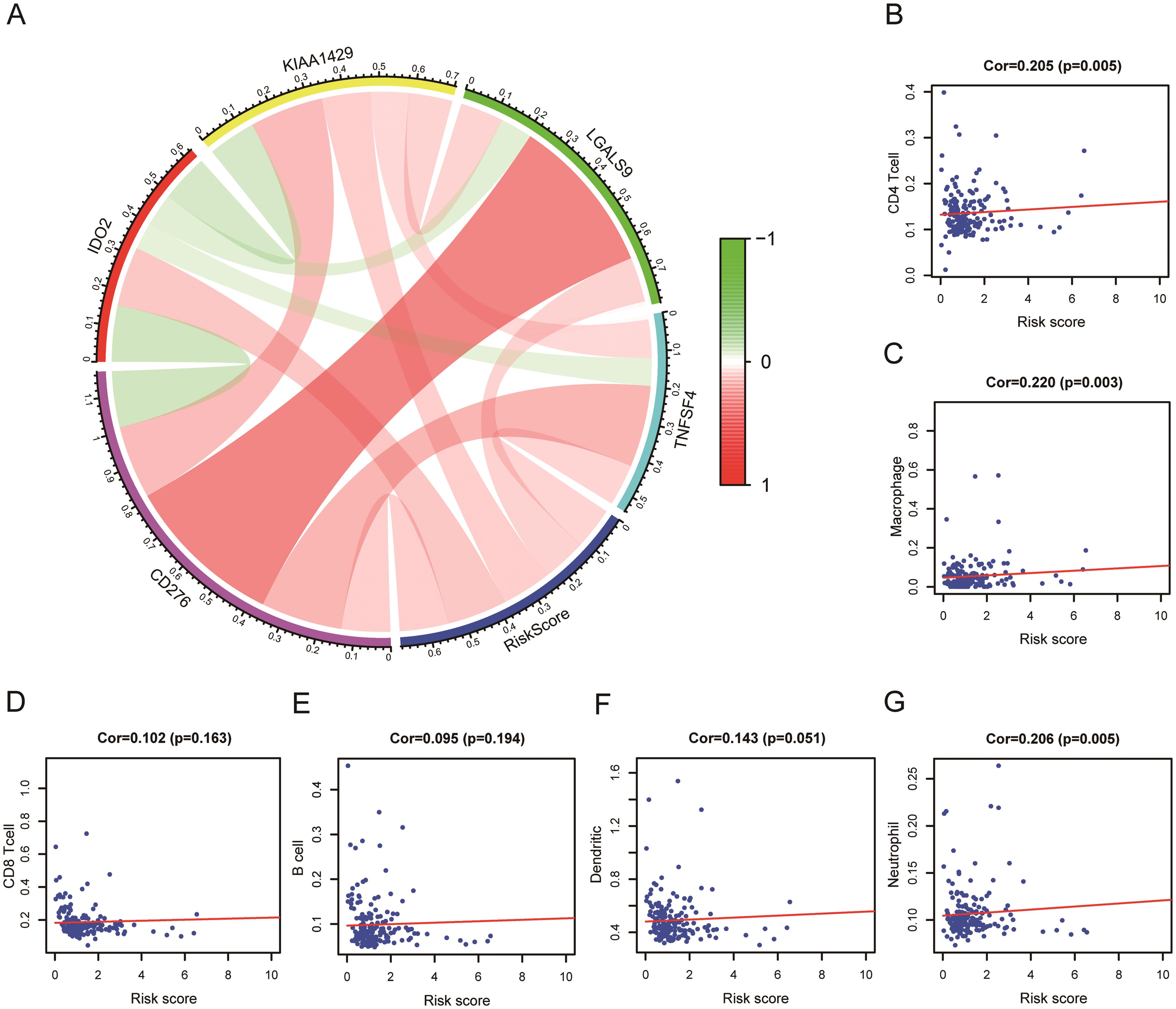 Correlation analysis between risk score and immune checkpoint gene and immune cell infiltration.