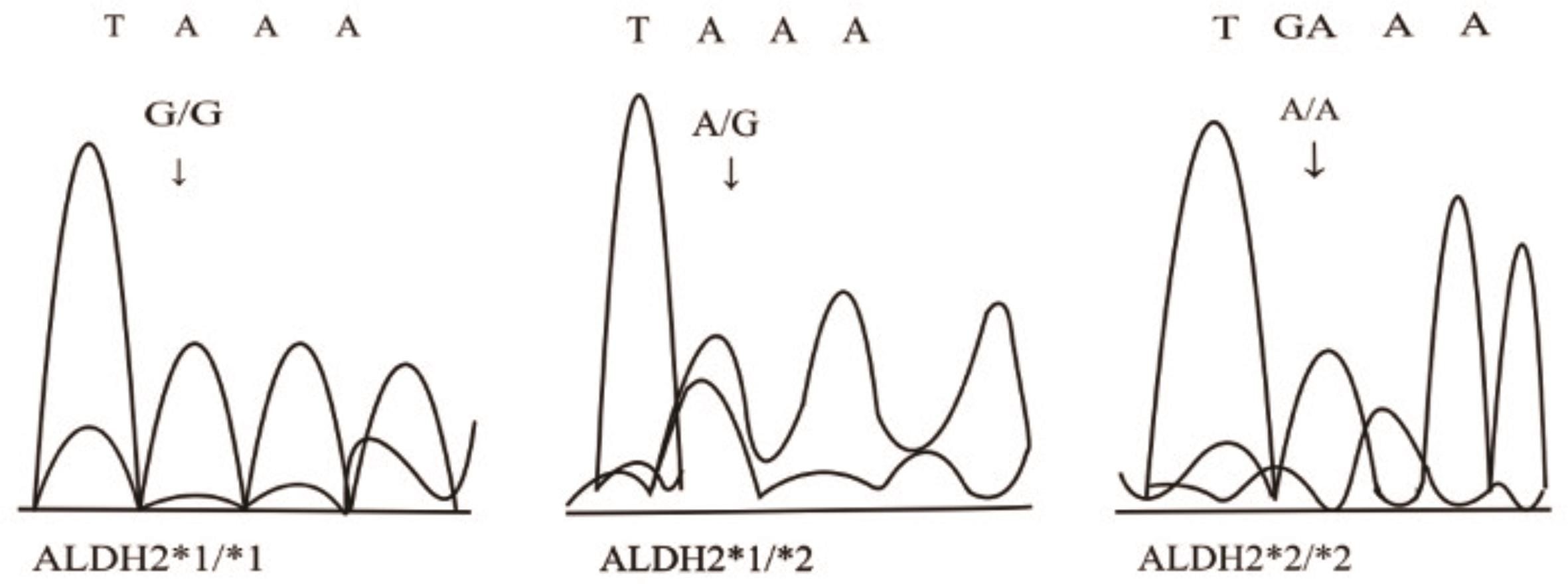 Genotypes of <italic>ALDH2rs671</italic>.