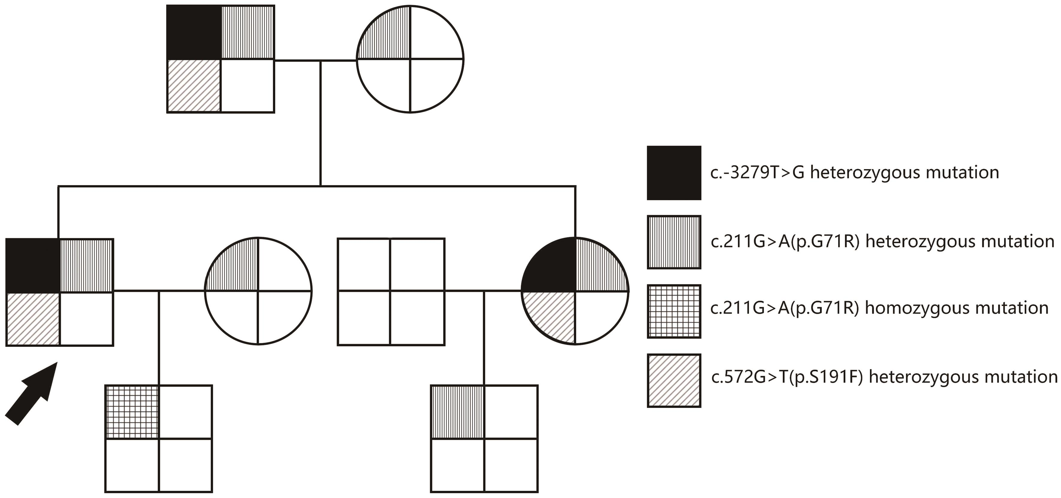 Family pedigree of patient 1.