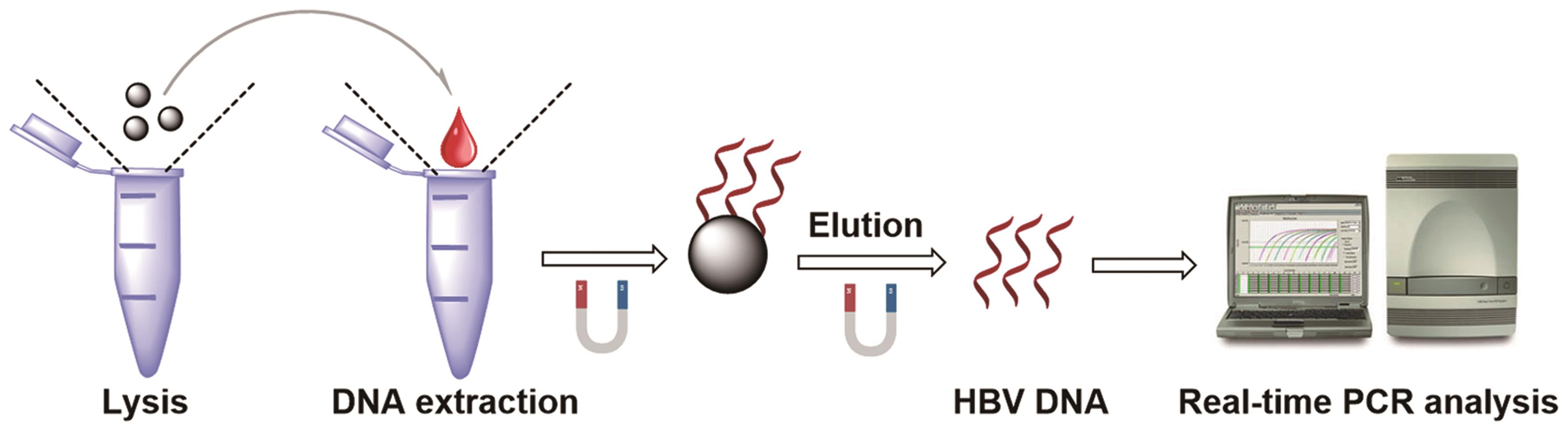 Process of real-time PCR based on magnetic nanoparticles for detecting HBV DNA.