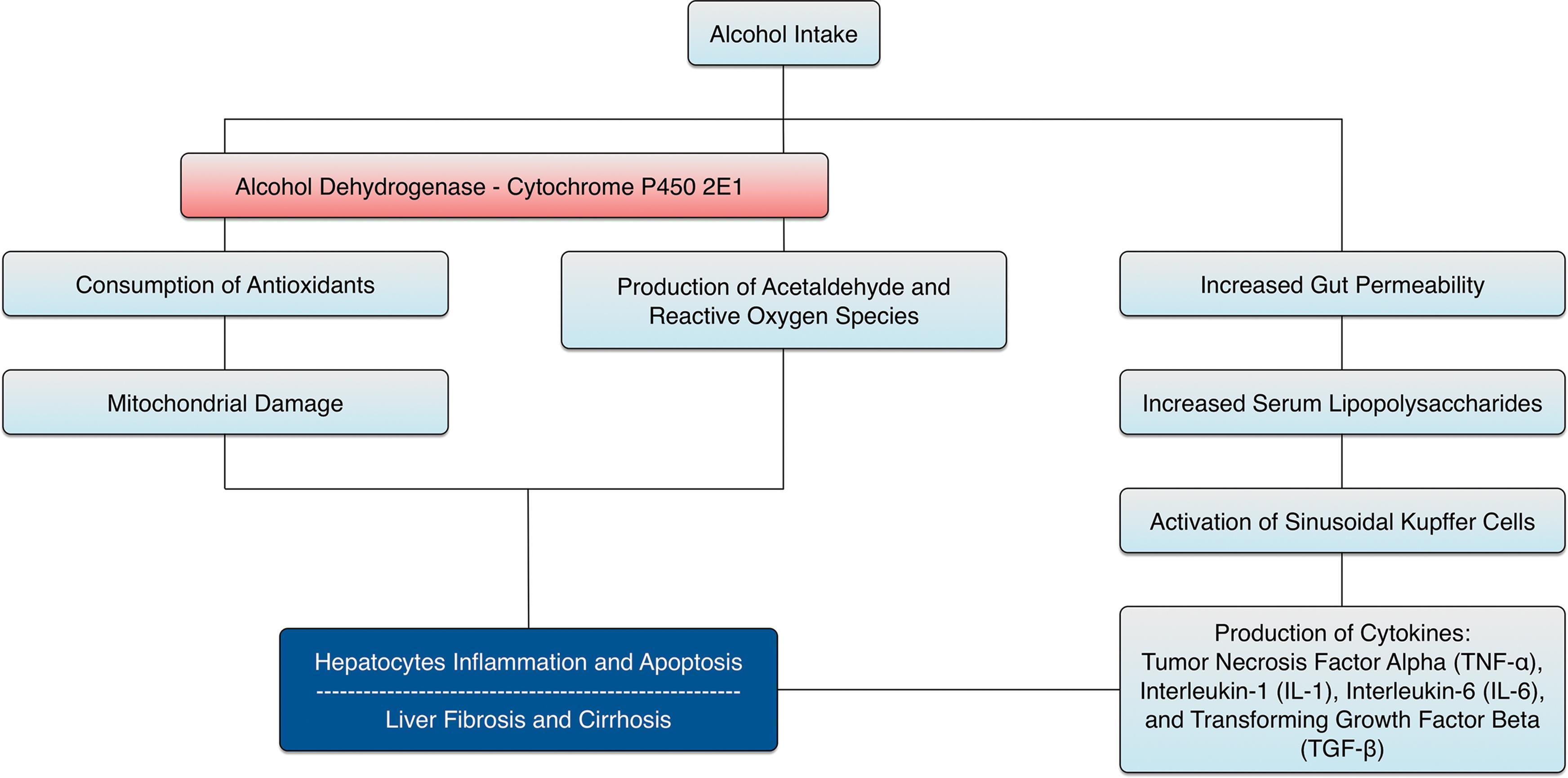 Pathogenesis of alcoholic liver disease.