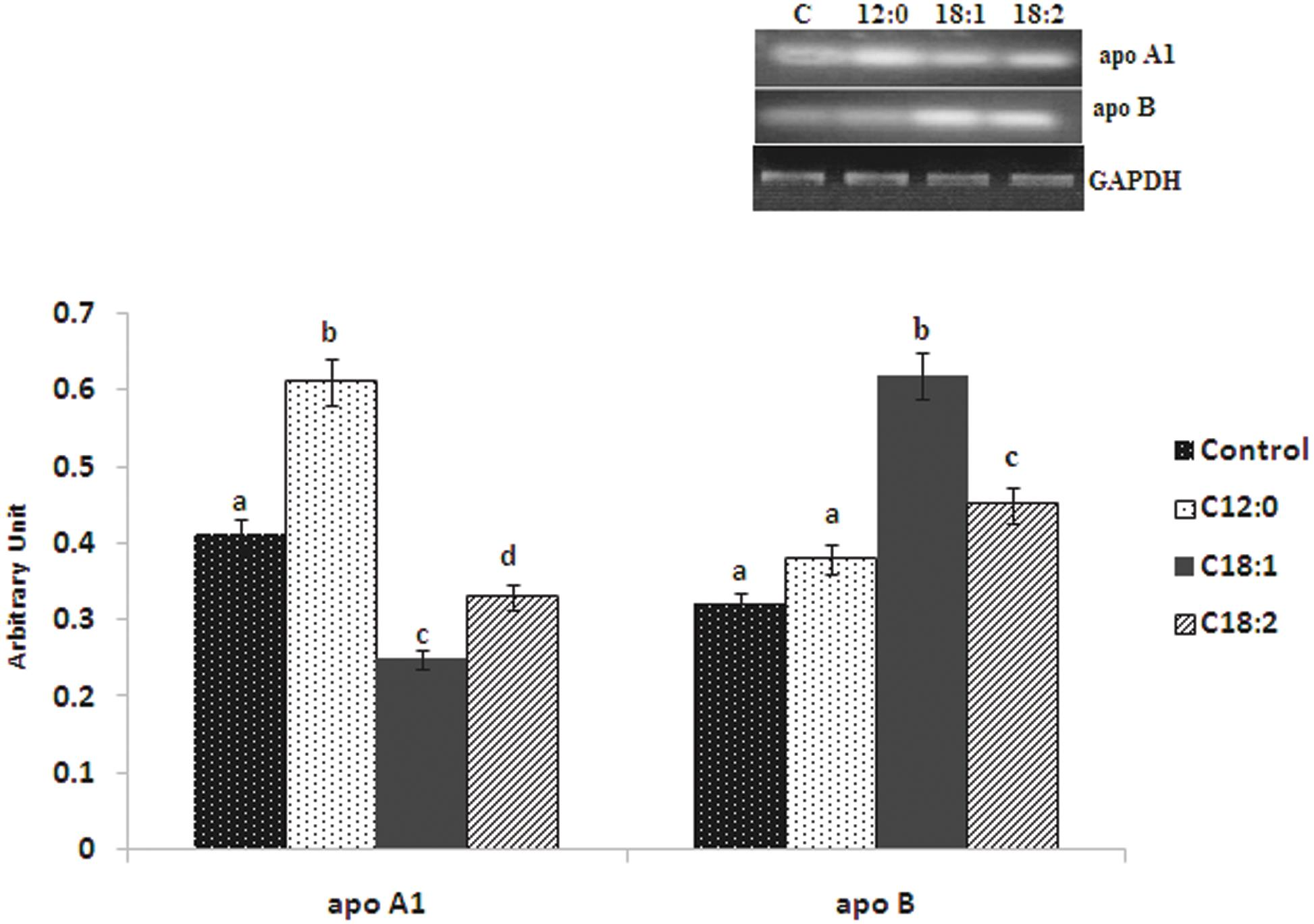 Effect of exogenous fatty acids on the mRNA expression of apolipoproteins in hepatocytes.