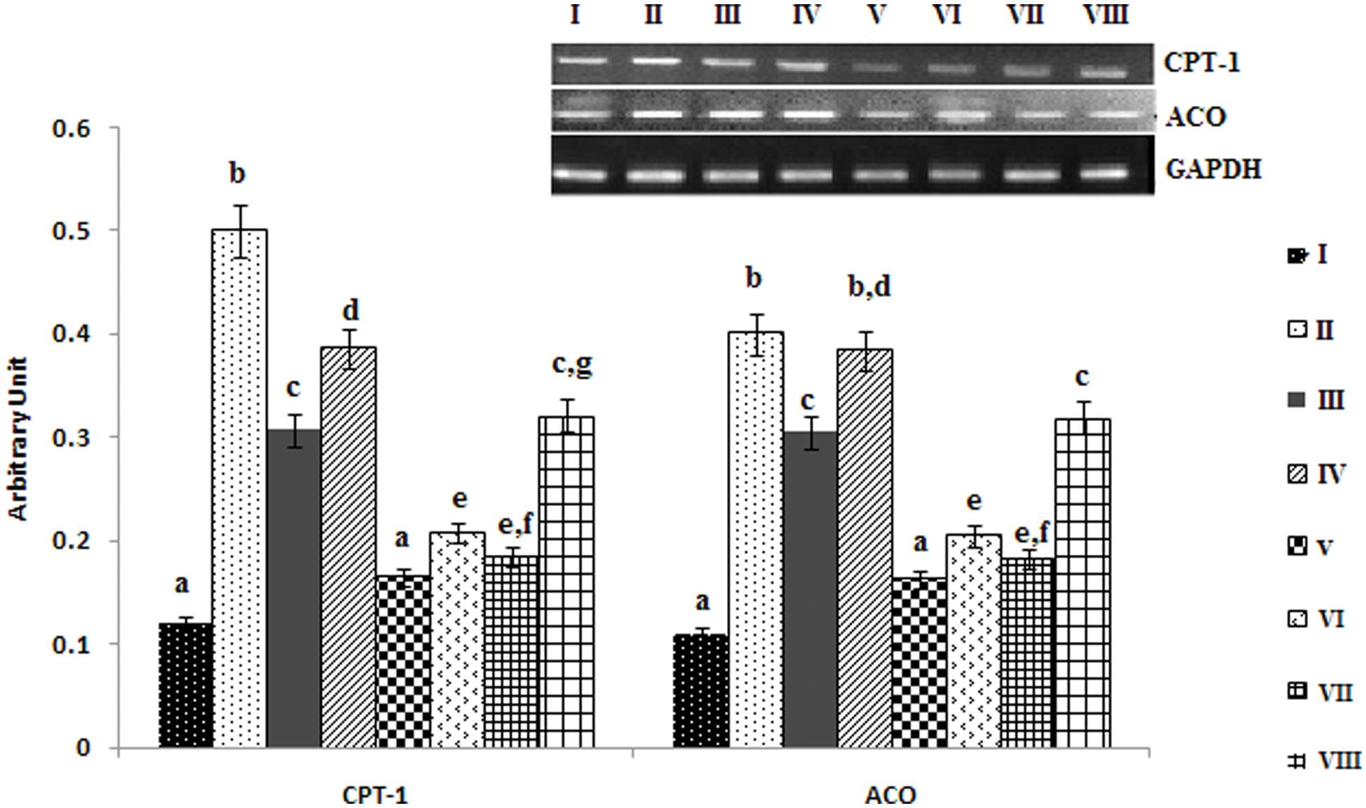 Effect of PPARα ligands on fatty acid mediated mRNA expression of carnitine palmitoyl transferase I and acyl CoA oxidase in hepatocytes.