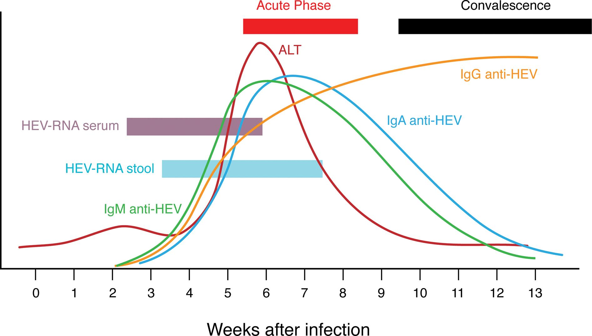 Schematic summary of main pathogenetic events (virology, serology, disease) during acute HEV infection.