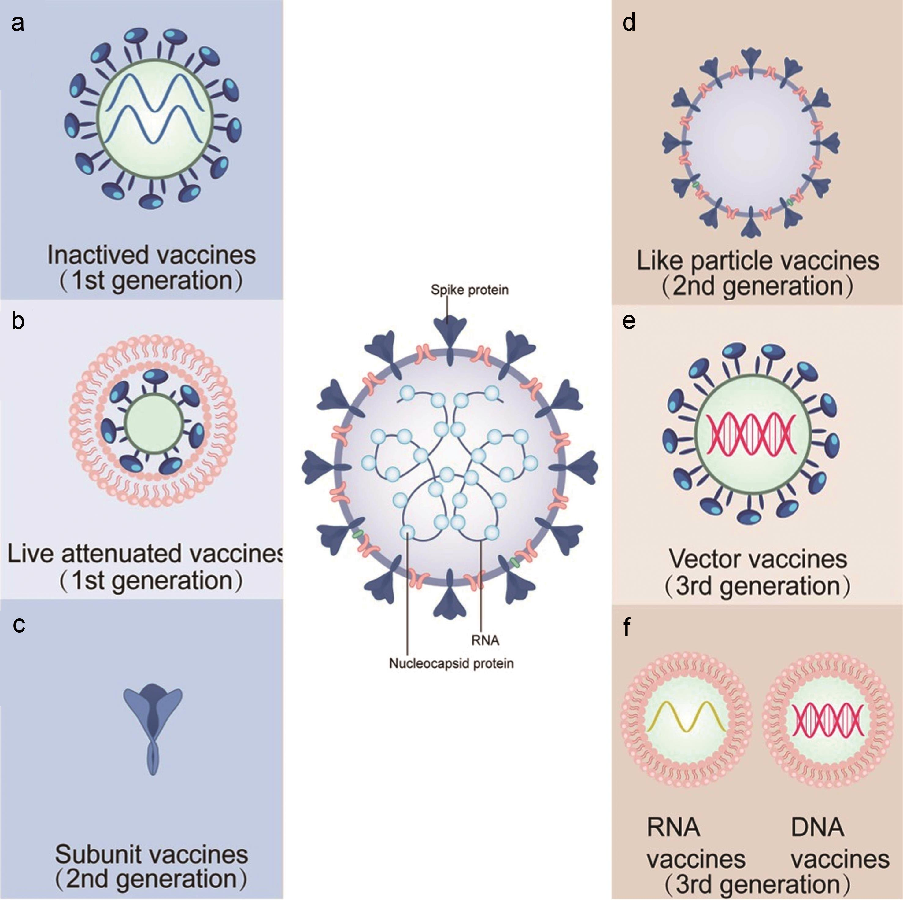 Illustrations for the six types of COVID-19 vaccines, including inactivated vaccines (a), live attenuated vaccines (b), subunit vaccines (c), virus-like particle vaccines (d), vector vaccine (e), and nucleic acid (DNA or RNA) vaccines (f).