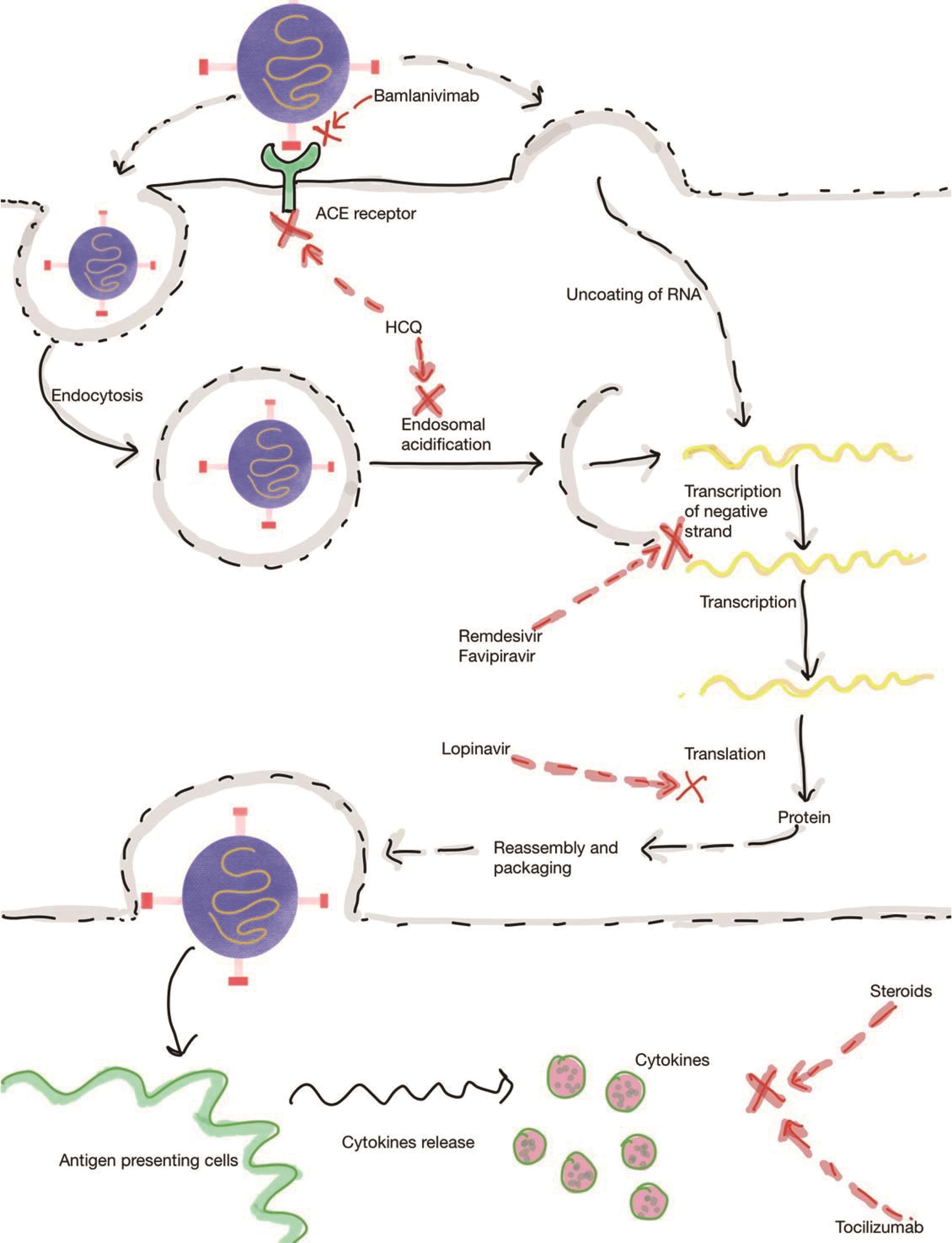 Mechanism of action of drugs used in the treatment for COVID-19.