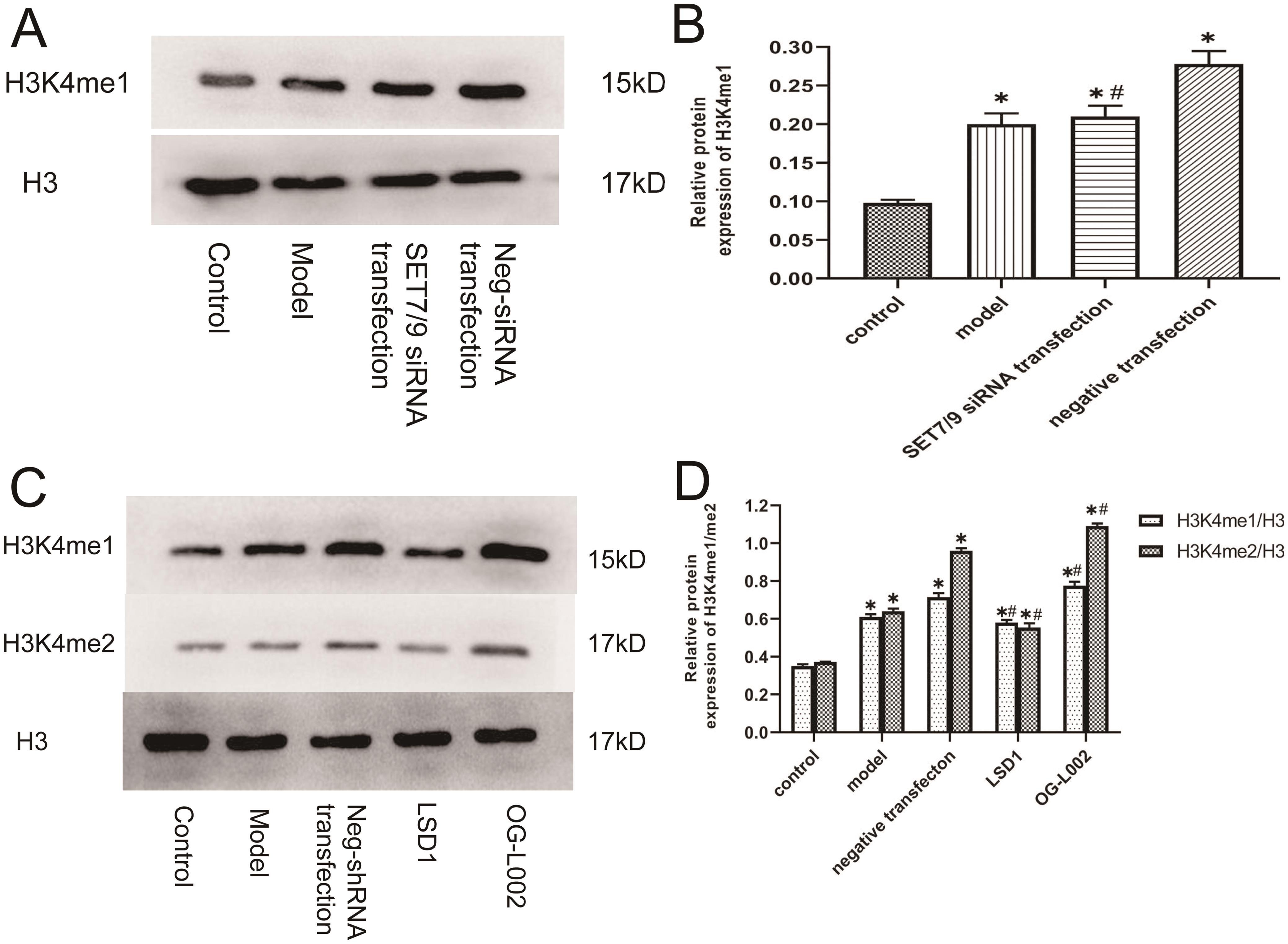 Effect of arsenic on H3K4 methylation in L02 hepatocytes.