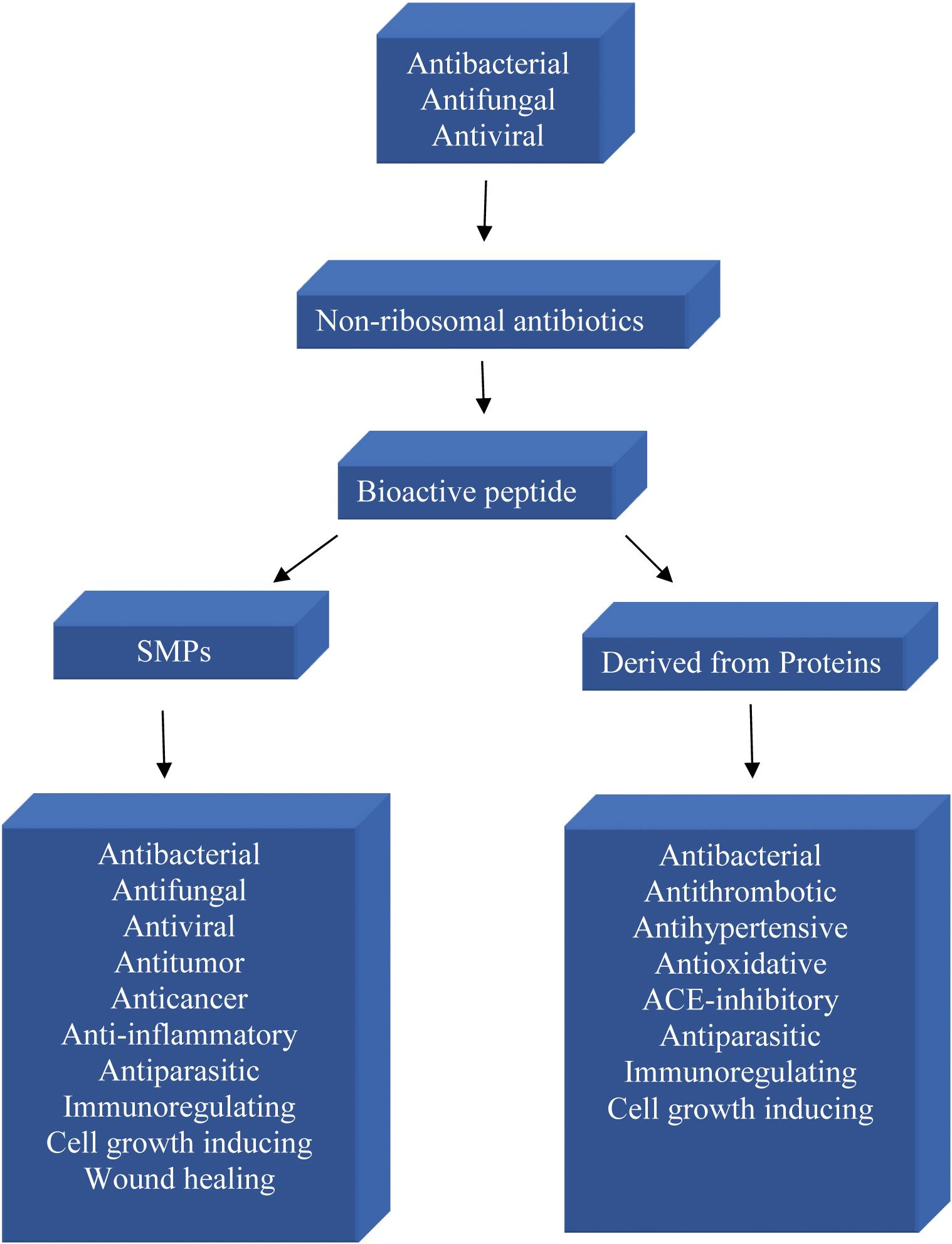 Different types of small bioactive peptides and their activities.