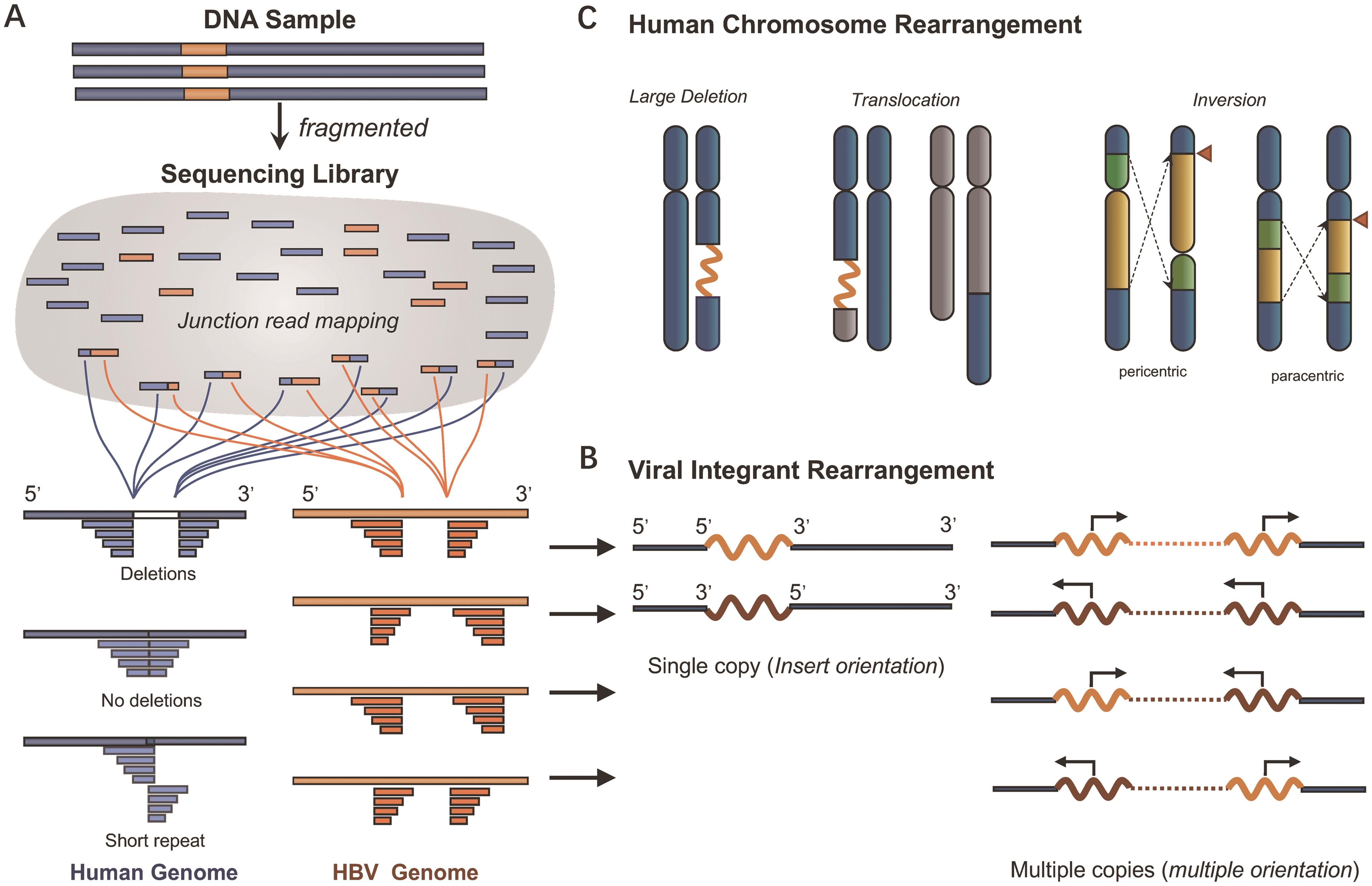 Integration identification based on short-read sequencing and cofounding factors.